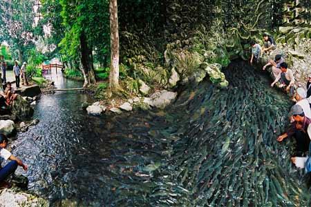 Suối cá thần - Điểm thăm quan tại Thanh Hóa