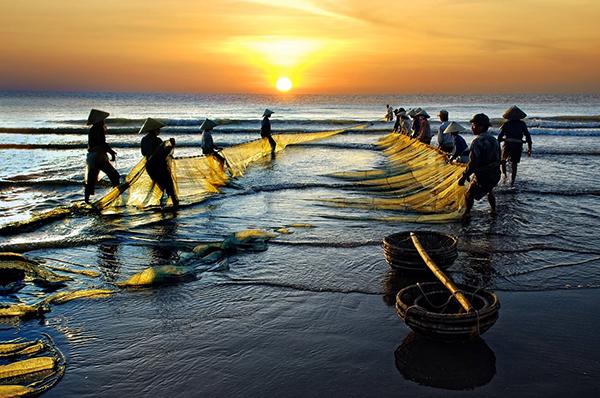 Kéo rồng tại bãi biển Sầm Sơn
