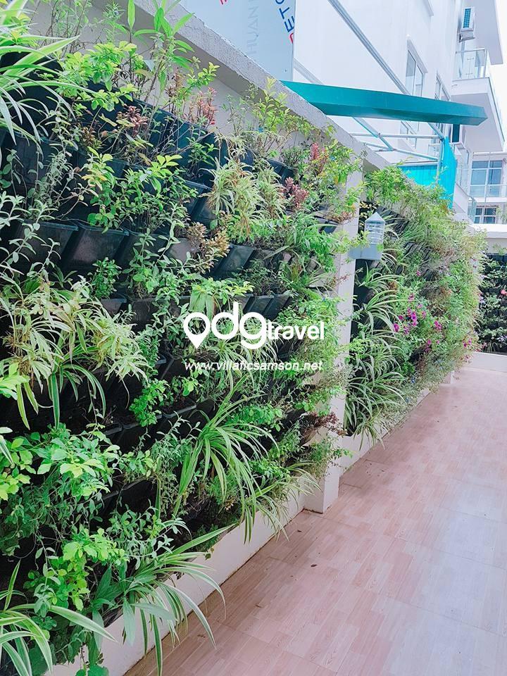 Không gian sống xanh tại Villa