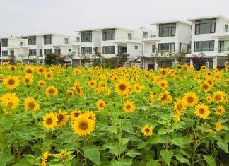 Bảng giá thuê biệt thự FLC Sầm Sơn